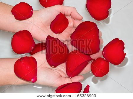 hands of a beautiful young woman in a bath with warm water cover with red rose petals