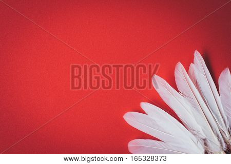 plain white feathers on a red background