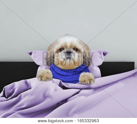 Very much sick cute dog laying in bed
