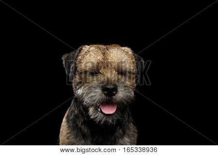 Close-up portrait of border terrier dog with closed eyes dreaming isolated on black background, front view