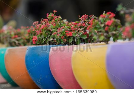 Poi Sian flowers in colorful pots lined a wall fence.