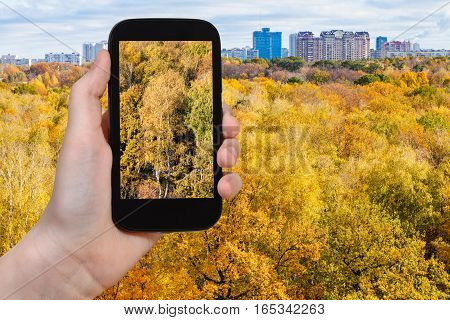 Photo Of Yellow Trees In Urban Park In Autumn
