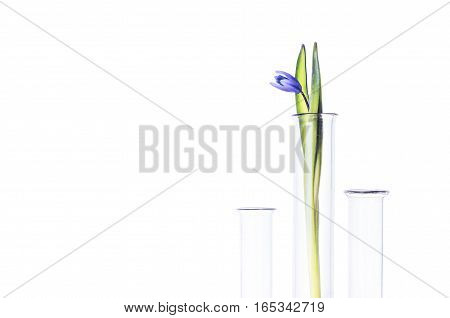 Flower In A Test Tube Isolated On White