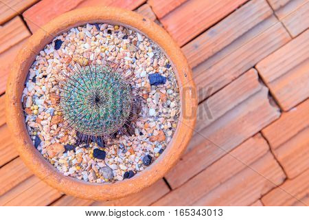 small cactus in red clay pot on the red brick floor