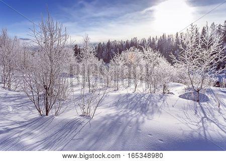 Winter snowy snag near covered ice Russia Siberia Altai