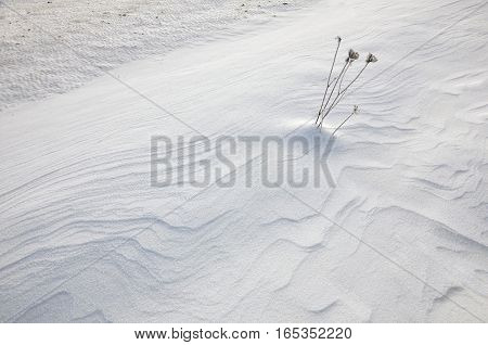 Minimalistic winter background. Earth covered with snow with wavy patterns and sticking lonely plant.