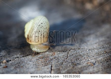 Snail on stone surface macro view. Shallow depth field, selective focus