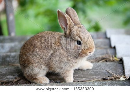 Small cute rabbit funny face, fluffy brown bunny on gray stone background. soft focus, shallow depth field