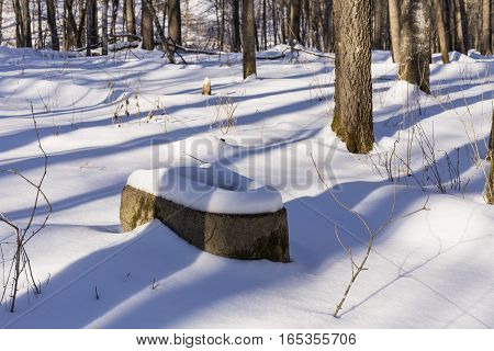 An old toilet in the woods during winter.