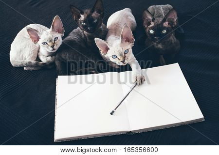 Make plans for future notebook with copy space. Planning concept. Funny curious Devon Rex kittens. Black and white kittens. Pluses and Minuses. Note papers pen. Copy space for wishlist or shedule