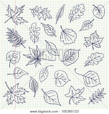 Freehand drawing autumn leaves items on a sheet of exercise book. Vector illustration. Set
