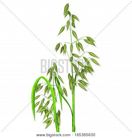 The oat, sometimes called the common oat, is a species of cereal grain grown for its seed, which is known by the same name.