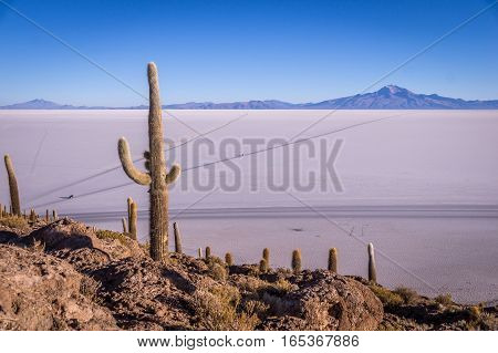 Sourrounded by the Salar de Uyuni salt lake the view from the cactus island Incahuasi near Uyuni, Bolivia is impressive