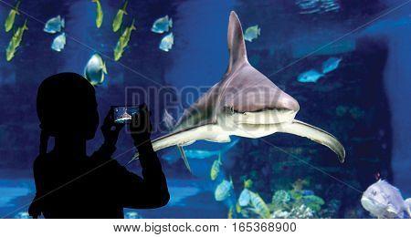 Child watching the shoal of fish and shark swimming in oceanarium