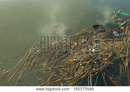 River with floating trash, nature and environment. Stock image.