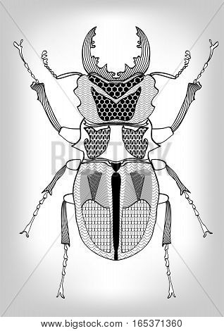Stag-beetle black and white drawing of beetle decorated with patterns. Symmetric drawing isolated insect on gray gradient background useful as decoration tattoo template emblem