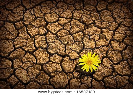 Pattern of cracked and dried soil With a single flower