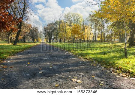 Autumn alley in a city park on a background of blue cloudy sky.