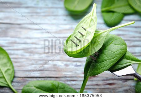 Fresh Baby spinach leaves skewered on a fork, blue wooden background. Top view with copy space, horizontal. Healthy, Ecology concept