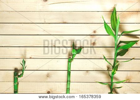 Three green bamboo branches lying on the wooden surface top view