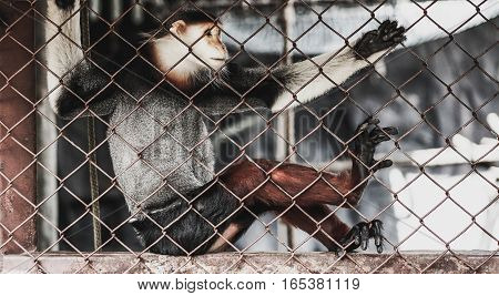 macaque in a zoo cage with background