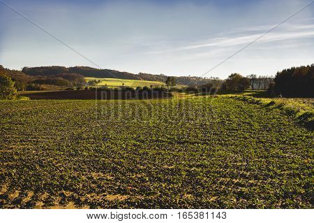 Landscape picture of Grub in pilach valley in autumn poster