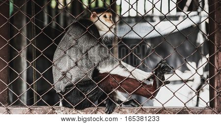 macaque in a zoo cage , zoo background
