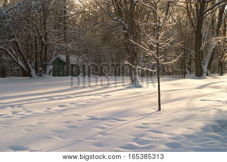 Winter landscape with forest trees shadow on snow