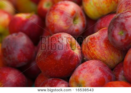 A pile of red braeburn apples at the farmers market