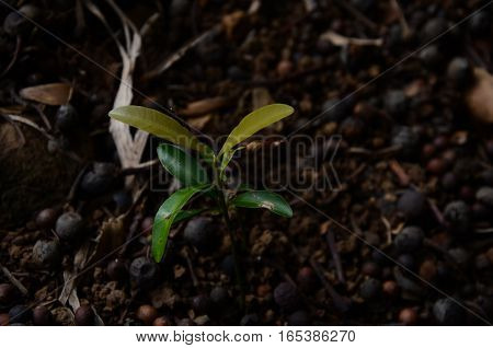 Little Plant Grass Eartg Soil Brown young nature