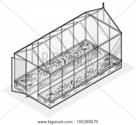Outlined isometric greenhouse with glass walls, foundations, gable roof and garden bed. Vector Horticultural Conservatory for growing vegetables and flowers. Classic cultivate greenhouse gardening.