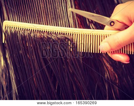Hairdresser Brushing Wet Dark Hair With Comb
