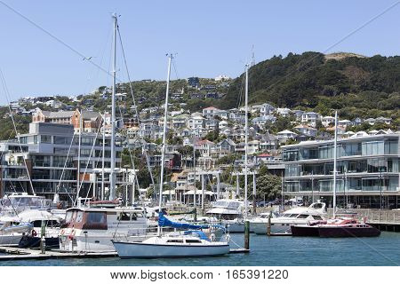 The view of the marina with Mount Victoria behind (Wellington New Zealand).