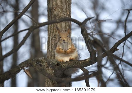This funny squirrel sat on his hind legs, hunched, and his front paws folded on his stomach. There is a strong resemblance to the posture of the person.