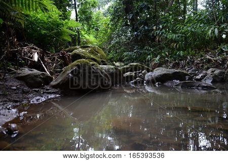 River Water Lake Puddle Rock Dirty Tropical Fern