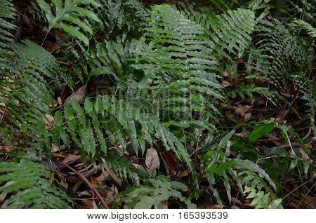 Fern Foast Green Plants Branch White Earth Soil