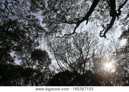 trees from a bottom view with sun rays penetrating
