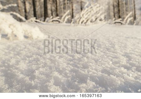 White snow texture in sunny day, macro shoot, blurred winter forest at background.