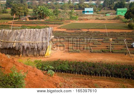 Idian Farm, Growing Flowers In The Open Ground (beds With Young Plants)