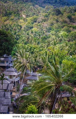 Roof of bungalows in the middle of the palm jungle