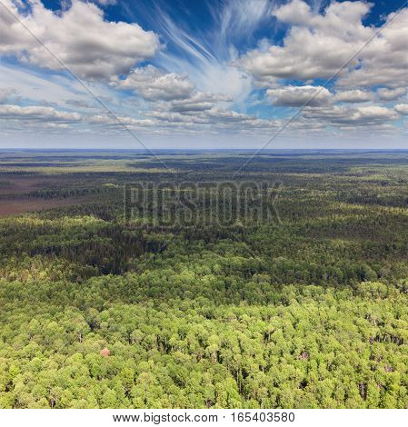 Aerial view of summer forest on heights of the flight of the bird.