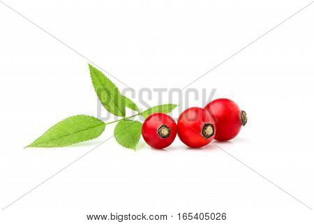 Rosehip with leaves isolated on white background.
