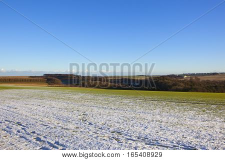 Snowy Wheat Field