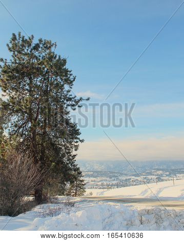 Winter landscape with snow covered fields, tall grass and fence posts in foreground.  Trees, hills and bright clear blue sky background.