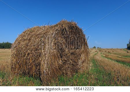compressed bale of straw after harvesting of grain crops in the field