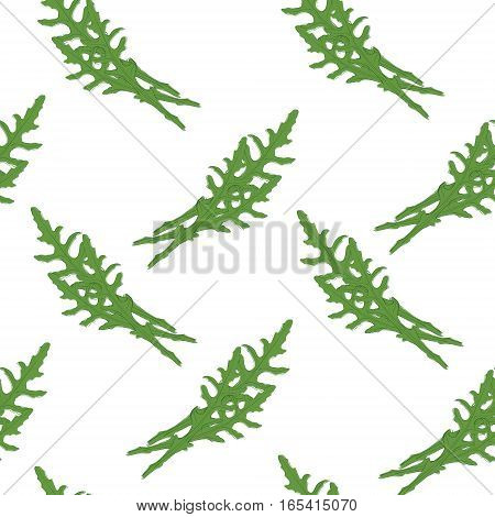 Vector Illustration Seamless Pattern, Background Hand Drawn Fresh Green Arugula Leaves Isolated On W