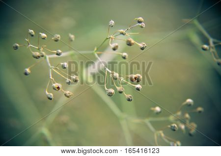 Vintage Blurry Photo Of Summer Meadow