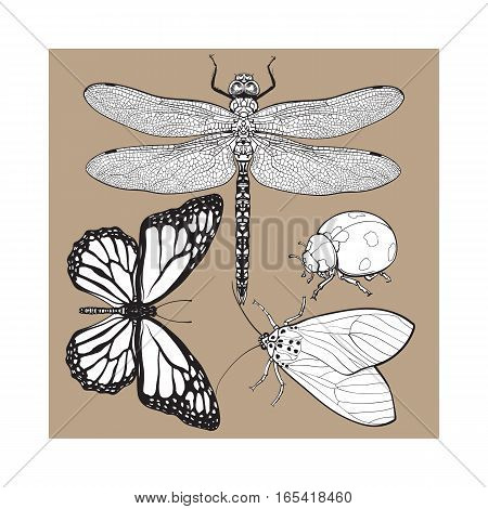 Set of insects like dragonfly, butterfly, ladybird and moth, sketch style vector illustration isolated on brown background. realistic hand drawing of dragonfly, butterfly, ladybug and moth