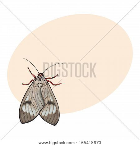 Top view of gray moth, sketch illustration isolated on background with place for text. color Realistic hand drawing of moth butterfly insect on white background