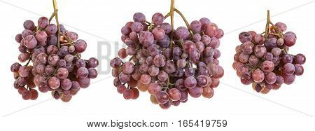 Bunch Of Ripe Purple Grapes. Isolated On White Background